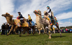 The camel race (Outdoorjive) Tags: other spring flikr event lounge events places uk horse norfolk eastanglia burnhammarket england unitedkingdom gb
