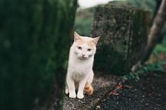 cnv000011 (雅布 重) Tags: taiwan nikon f100 nikkor 50mm f14d rossmann100 film cat 2017