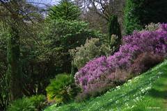 IMG30180a_C (Kernowfile) Tags: glendurgangarden plants trees flowers