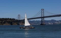 (seua_yai) Tags: sanfrancisco2017 northamerica america usa california bayarea sanfrancisco thecity baybridge oakland sailboat