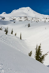 NT3.0078-PDX1700416_60537 (LDELD) Tags: oregon spring mounthood snow timberlinelodge