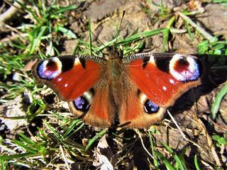Butterfly 1219