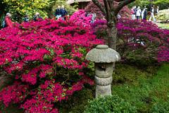 Japanse Tuin Clingendael 2014-02246 (Arie van Tilborg) Tags: japanesegarden denhaag thehague clingendael japansetuin clingendaelestate landgoedclingendael