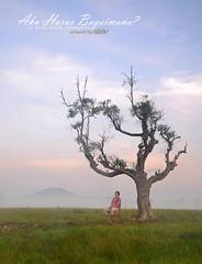 AKU HARUS BAGAIMANA? (alzikr) Tags: people art field sunrise malaysia kh kg aku terengganu harus paady manir bagaimana baloh musthofa bisri