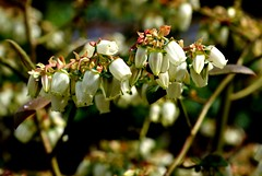 Walled garden at Norton Priory (joewest2) Tags: flowers water leaves liverpool landscape flora waterdrop lancashire walledgarden runcorn merseyside nortonpriory wateronleaves joewestwood