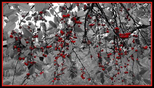 Red/B&W