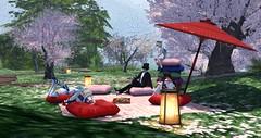 Warm Spring Sun (BlueLotusOkiya) Tags: secondlife cherryblossom sailormoon hanami tuxedo
