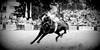 El revoleo (Eduardo Amorim) Tags: horses horse southamerica caballo uruguay cheval caballos cavalos prado montevideo pferde cavalli cavallo cavalo gauchos pferd hest hevonen chevaux gaucho 馬 américadosul beijos montevidéu häst uruguai gaúcho 말 amériquedusud лошадь gaúchos 马 sudamérica suramérica américadelsur סוס südamerika jineteada حصان άλογο americadelsud gineteada ม้า americameridionale semanacriolla semanacriolladelprado eduardoamorim boanoitebonssonhos ঘোড়া nodelasgraciasesunplacervertusfotos