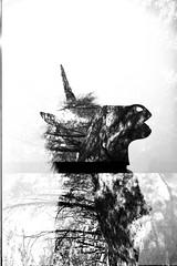 Film Swap R.R. (BigClownshoes) Tags: portrait film silhouette darkroom forest profile multipleexposure fantasy kodaktrix unicorn mx nikonf3 jobo cpe2 nikkorh85mm r09125