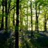Backlight (Kev Palmer) Tags: wood uk flowers trees light tree green bluebells woodland spring nikon seasons may shade staffordshire keele newcastleunderlyme gbr benbo benbotripod threeshiresphotographers d800e nikond800e