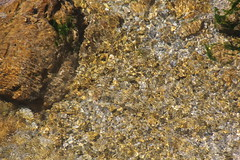 NATURE DIOISE (26150)  ST MARCEL, LART DU CAMOUFLAGE DE LA TRUITE (jldarriere) Tags: die vercors ruisseau drme rhnealpes truite dauphin diois fario 26150 meyrosse deaaugusta