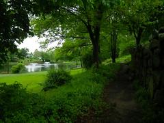 IMGP6952 Fulton Park spring rebirth (shutterbroke) Tags: park green spring pentax ct fulton waterbury 2014 wg10 shutterbroke