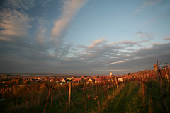 Pod Martinkou (Katka S.) Tags: sunset sky sun evening republic czech wine wineyard reservation horn wines moravia morava plava vstonice