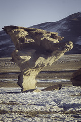 (RoX4NnE) Tags: trip travel viaje red tree beautiful stone de wonder landscape arbol desert flamingo salt paisaje el lagoon latinoamerica desierto laguna flamenco sal uyuni piedra suramerica colorada