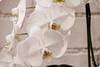 "Graceful (karakutaia) Tags: sun tree love nature japan paper temple japanese tokyo heart superb card e simply sogno rockpaper afotando ""flickraward"" flickrglobal elementsorganizer allbeautifulshotsandmanymoreilovenature flowerstampblackandwhite transeguzkilorestreetarturbanagreatshotthisisexcellentcontestmovementricohgxr""serendipitygroupbluenatureicapture flickraward5""j tra realtabstract"