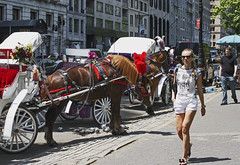 Waiting (fantommst) Tags: park nyc horse usa ny newyork us waiting carriage central tourists line rides lisaridings fantommst