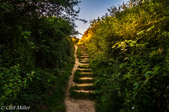 Steps into the sun. (Distinctive Digital) Tags: sunset england grass outside evening countryside bush exterior dusk gb scarborough grasses summertime wildflowers shrub bushes shrubs northyorkshire parkland landscapephotography colorimage landscapeorientation colourimage landscapephoto