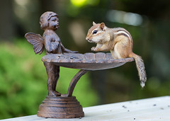 Plotting For War (SavingMemories) Tags: cute statue angel mouse rodent squirrel critter wildlife chipmunk backyardwildlife tuco savingmemories suemoffett