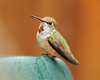 Tiny Only in Stature (J Bespoy Photography) Tags: red wild portrait orange white canada mountains male green bird beautiful rain closeup chair hummingbird bc britishcolumbia small tiny perched juvenile cascade tc14eii rufous ©allrightsreserved specanimal nikkor70200f28vrii