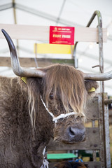 Kent_County_Show_2014_007