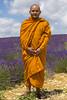monaco buddista (fotopierino) Tags: portrait portraits canon mark iii monaco 5d provence viola francia ritratto 70200 arancio provenza lavanda buddista purle valensole fioritura fotopierino