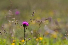 Chartreuse, France (Alexandre Carpentier) Tags: france nature wildlife rando chartreuse pro l 1022mm lenses aventure rhônealpes aulpduseuil cirquedesaintmême 70200mmf4is guiersvif vallondemarcieu canon7d filtrelee