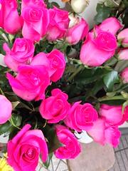 Paseo Hurfanos, Plaza de Armas. (Elias Rovielo) Tags: chile pink santiago roses rosas plazadearmas rosachoque paseohurfanos