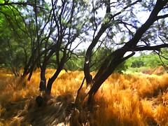 Hidden Oasis July 2014 (ImageLyn Photos) Tags: nature water spring sedona az