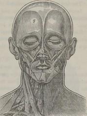 Anglų lietuvių žodynas. Žodis antagonistic muscle reiškia antagonistinis raumenų lietuviškai.