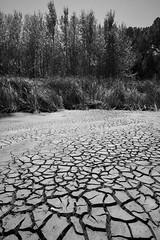 Drought (hassner) Tags: africa southafrica westerncape winelands stellenbosch farm dam dry drought cracks texture trees bw blackwhite blackandwhite monotone mono