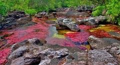 Caño Cristales - The most beautiful river in the world (Pedro Pablo Orozco) Tags: colombia meta macareniaclavigera lamacarena río algas elríomáshermosodelmundo themostbeautifulriverintheworld ngc