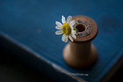 Lone Star (Captured Heart) Tags: chamomile singleflower woodenspool book singleness simple