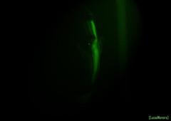 9/52: Green Light (Lucas Silva Moreira) Tags: green light 52 weeks 52weeks lorde