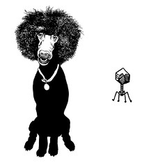 Rooney and the virus (Don Moyer) Tags: poodle virus ink drawing sketchbook moyer donmoyer brushpen