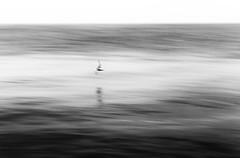 Die Möwe (in explore) (tan.ja1212) Tags: meer trüb möwe wasser spiegelung vogel monochrom schwarzweis sea water reflection bird murky