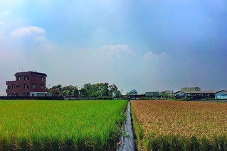 63/365 Color rice paddy