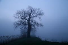 comp_IMG_0844 (geraldtourniaire) Tags: nebel blaue stunde baum tree 6d canon 24105l natur outdoor