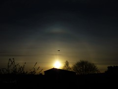 Flyby Halo..x (Lisa@Lethen) Tags: halo weather morning sunrise dawn bird silhouette nature wildlife