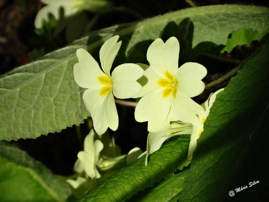 Águas frias  (Chaves) - flores campestres ...