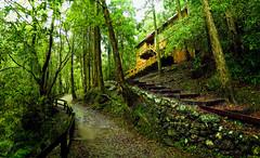 滿月園 Full Moon Park (Y.P. Jhou) Tags: travel taiwan forest trees nature hiking track 滿月圓 森林步道 樹 旅遊 自然 風景 landscape