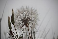 IMG_9838 (christinehag) Tags: plant plante nature spring printemps άνοιξη φυτό