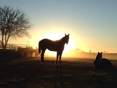 The Dawn is Breaking... (It Feels Like Rain) Tags: firstlight daybreak breakingdawn bythedawnsearlylight sunrise westtexas texas westtexasranches ranch ranching ranches aqha americanquarterhorseassociation horse horses mares mare broodmares caballo cheval