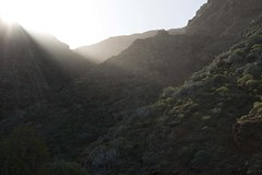 Sun rays awaking the ravine (ramosblancor) Tags: naturaleza nature paisaje landscape valle valley sol sun rayosdesol sunrays tabaibal cardonal tenerife islascanarias canaryislands españa spain barranco ravine