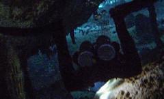 Tulum Dos Ojos Cenote dive-3