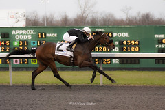 Drawing Away (Casey Laughter) Tags: racehorse turfway thoroughbred horse horseracing horses winner loser fun racing racetrack race track saddlecloth tack gate taa