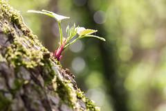 Le printemps est là - Spring is here (bboozoo) Tags: canon6d tamron90vc kenkotube20mm nature fleur flower bokeh feuille leaf arbre tree toiledaraignée spiderweb