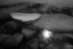 Marée haute (Patrice StG) Tags: bw nb noiretblanc blackandwhite sony a7ii printemps spring rivage shore soleil sun nikkor1835g 1835mmf3545g ice glace fleuvestlaurent fleuve stlawrence stlaurent stlawrenceriver gimp