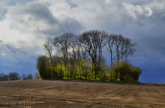 group of trees (Neal J.Wilson) Tags: still stormclouds skies clouds weather trees fields farming green seasons spring denmark danishlandscapes jutland jylland nordic scandinavia europe landscapes nature