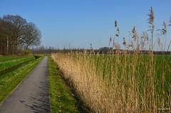 landscape Forest (JaapCom) Tags: jaapcom landed landscape landschaft wezep trees natural naturel dutchnetherlands paysbas holland forest veluwe gelderland