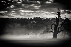Foggy (k.tusnio) Tags: fog fairy tale foggy hdr nikon poland landscape bw black white tree clouds hard noir oak sky morning sunrise d5100 85mm rogalin poznan polska